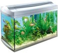 to_repair_aquarium-freesovet.ru